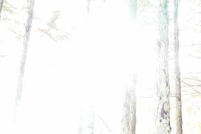 DSC03860h.jpg