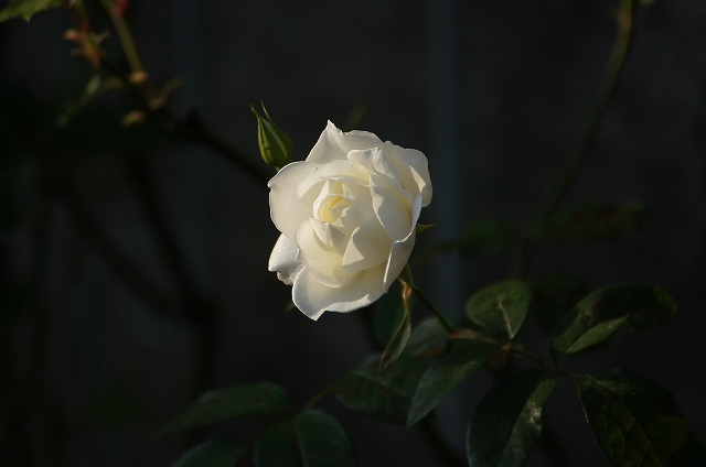 DSC04482.jpg